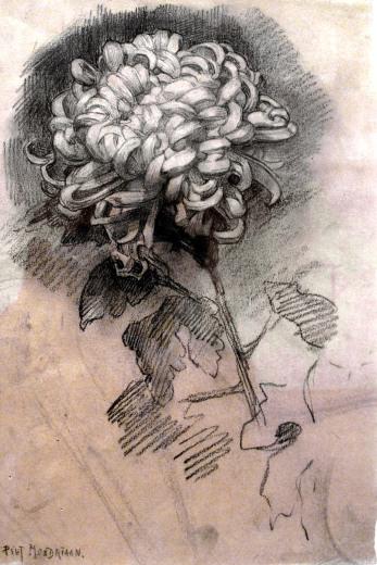 mondrian-crisantemo