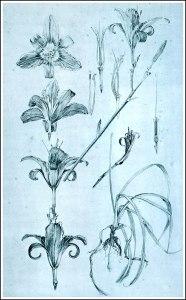 Alfons Mucha fiori documenti decorativi img