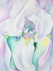 Georgia O'Keeffe iris img fiori