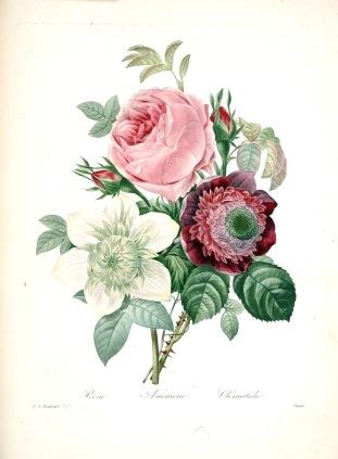Pierre-Joseph Redouté, Scelta dei fiori più belli, Foglio 143