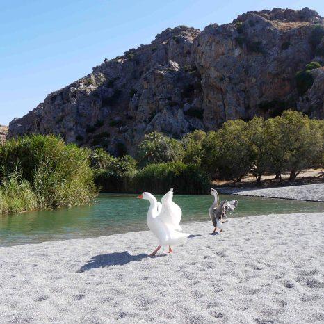 Creta, spiaggia di Preveli