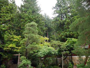 giappone_takayama_trees2