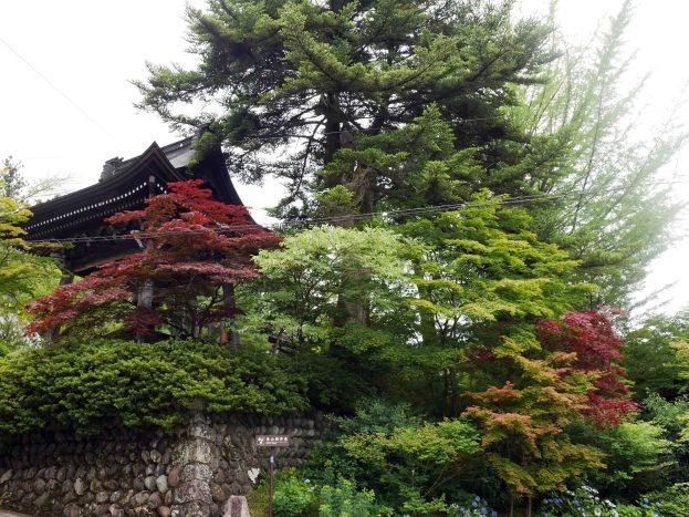 giappone_takayama_trees1