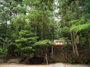 giappone_takayama_trees3