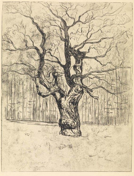 Edvard Munch, Quercia, 1903