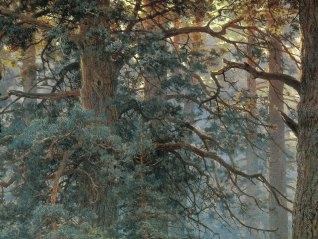 Ivan Shishkin, Mattino in una pineta, 1886 - dett 02